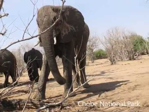 Zimbabwe and Botswana trip  - 11 days in November 2015