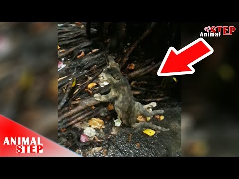 Paralyzed Stray Kitten Found Dragging Under the Rain Gets Rescued