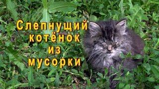 Слепнущий котенок из мусорки Кузя