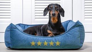 Будва Черногория первые впечатления Сложно ли снять жилье с собакой Такса Дин в Евротуре ч 7