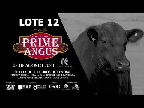 LOTE 12   BLACK OPAL TEI896 RODEIO Prod  Agência El Campo