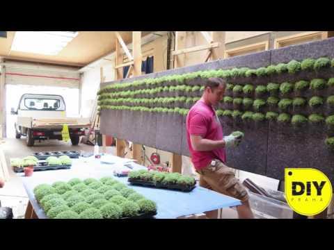 DIY - Green wall