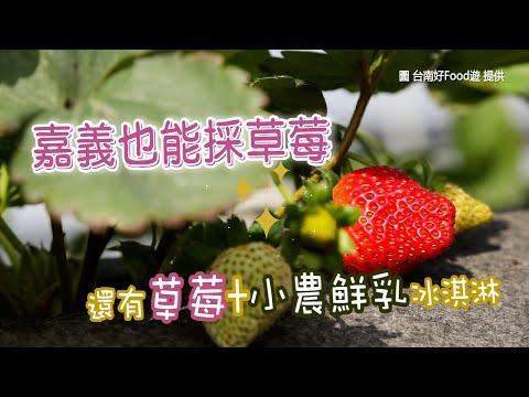 有機優雪草莓甜又香!嘉義高架草莓園 激推果園自製義式冰淇淋