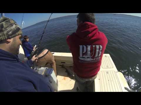Striper Fishing 4-10-16 Raritan Bay