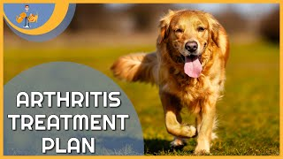 Treating Arthritis in Dogs  a plan to keep them pain free!