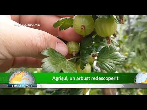 Agrisul, un arbust redescoperit 15 10 2019