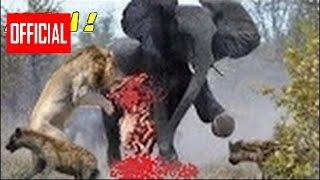 10 Сумасшедшее Животное Драки Пойманы На Камеру   Самые Удивительные Дикие