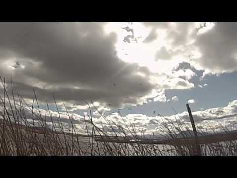 Lower Klamath Duck Hunting