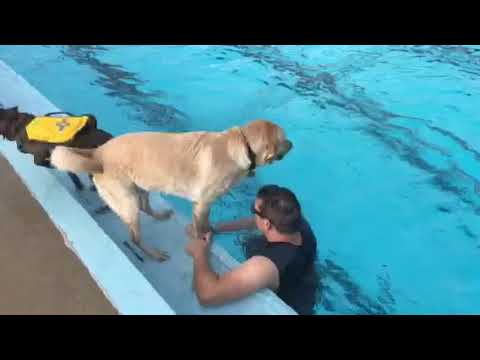 On Assignment with Anelia: Doggie dip at pool marks summer's end