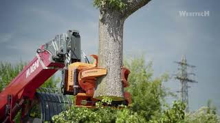 MAGNI Telescopic handler with tree attachment