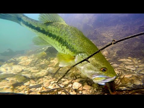 Thumbnail: Bass SLAM Baits in SLOW MOTION | GoPro UNDERWATER Bed Fishing - See Description for Giveaway
