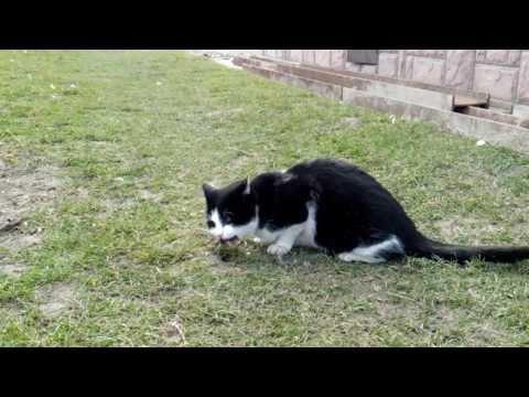 Kocica Klementyna wdupcza sikorkę