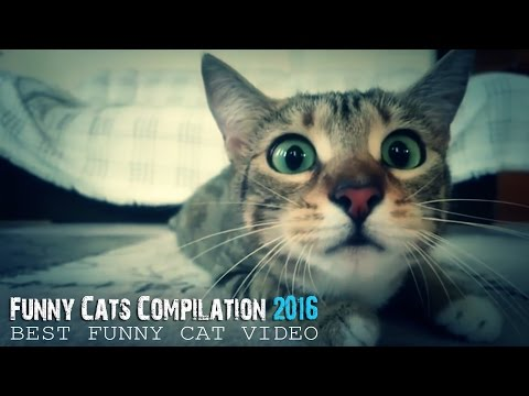 Best Funny Cat Video - Funny Cats Compilation 2016