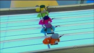 TPIR Primetime 5/25/16: The AMAZING Rat Race