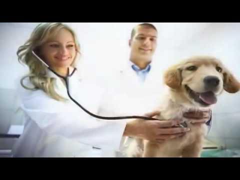Pet Insurance - Dog Insurance