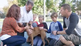 Abandoned Boxer Dog Gets a New Family