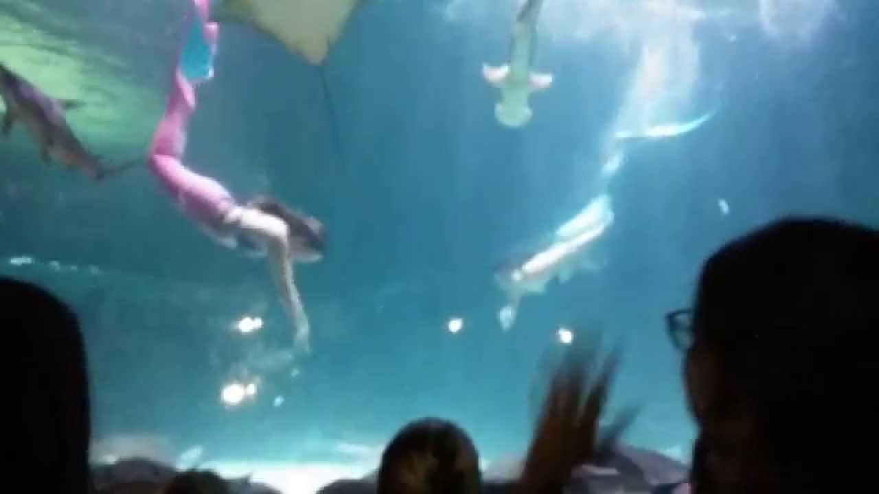 Ripley S Aquarium In Myrtle Beach Mermaid Dive Show 9 6 14 Stella And Kailani You