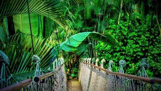 Real Rainforest, Gentle Rain Sounds, Distant Tribe Music, Bali Island, Relaxing Sounds