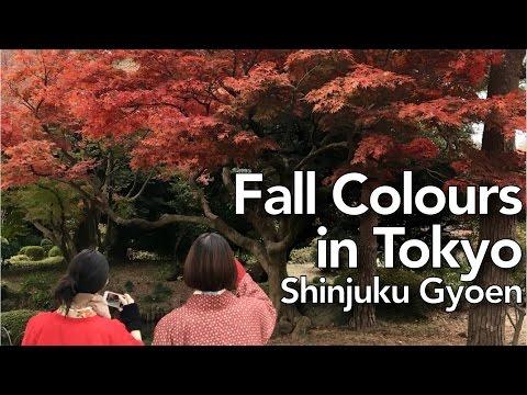Fall Colours in Tokyo - Shinjuku Gyoen | Ep. 058 | OurLifeInJapan