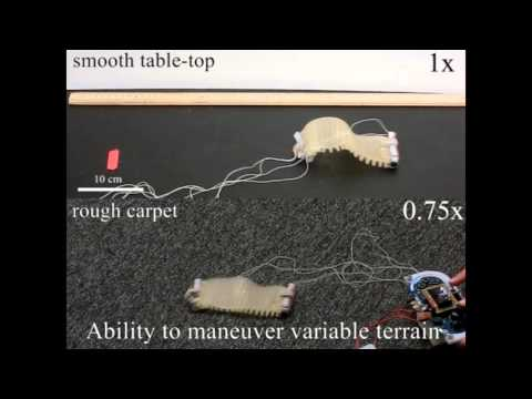 Motor-tendon actuated soft robot