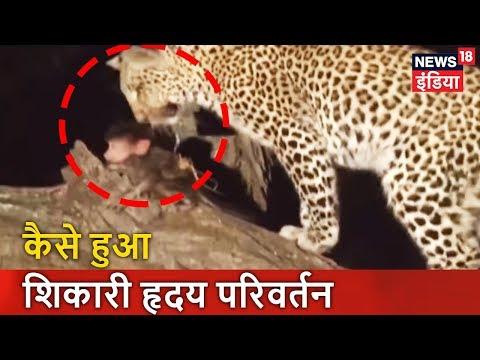 कैसे हुआ शिकारी 'हृदय परिवर्तन'? | जंगल में एक अनोखा रिश्ता | Pata Chala Hai | News18 India