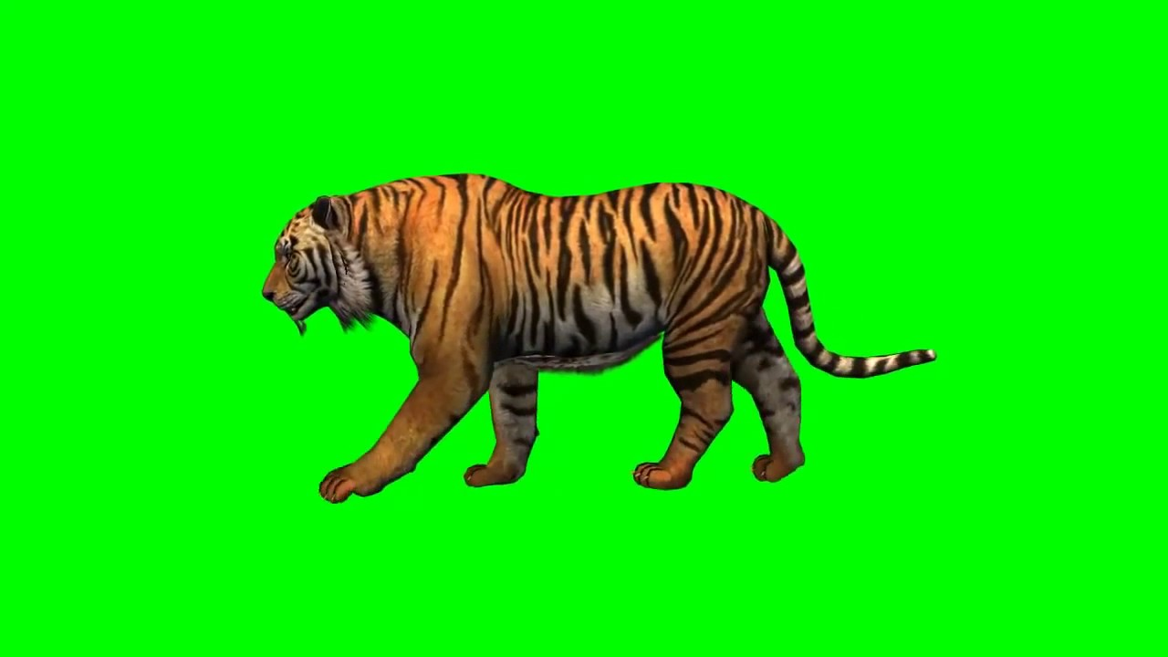 Get tiger walking in green screen and edit it with kinemaster and make your  own animation