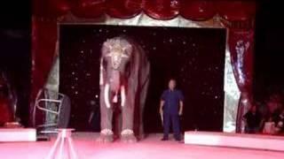 big boy el elefante del circo chino de pekin