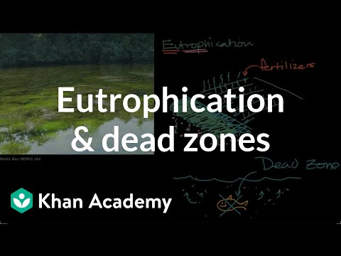 Eutrophication And Dead Zones | Ecology | Khan Academy