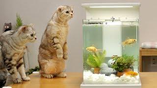 Download 고양이와 금붕어 어항 꾸미기 - 고양이들 반응 Mp3 and Videos