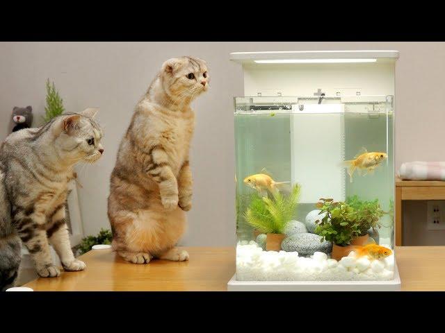 고양이와 금붕어 어항 꾸미기 – 고양이들 반응