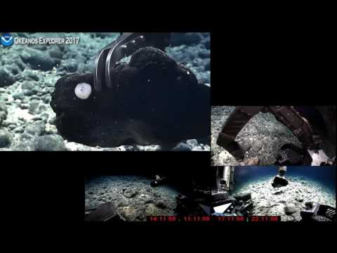 NOAA Okeanos Explorer - Cams 1, 2 & 3 Combined