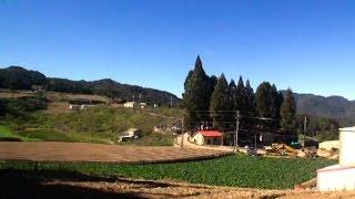 夜雨思情-吉他演奏/福壽山農場
