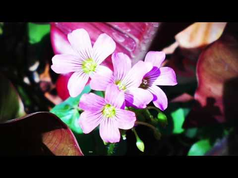 Beautiful Flower,Piano composition by Metta Legita, Morning Spirit, Positive energy
