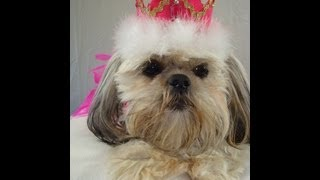 ✂ How To Make Royal Princess or Prince Crown Top Hats For Dogs  ♡