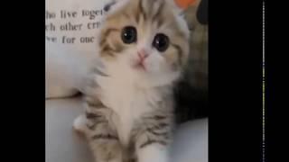 Funny & Cute Babies And Animal Compilation Part 2 2019!!!