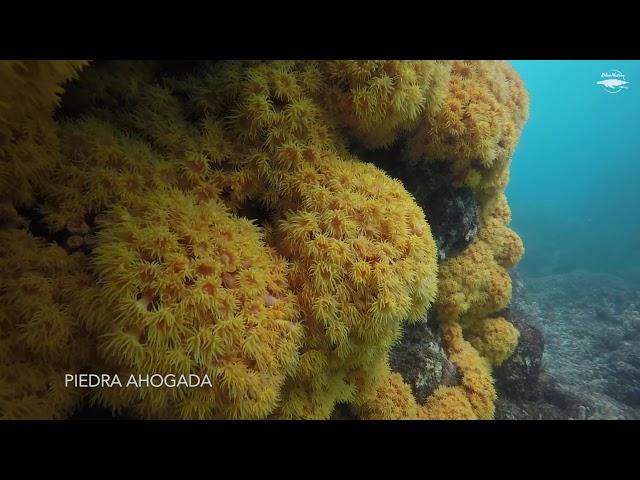 2nd Technical Exploration at Mt Eden in Loreto (plus bonus reef dive!)