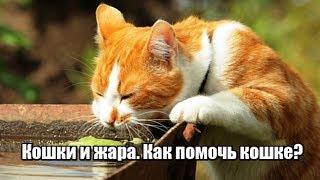 Кошки и жара.  Как помочь кошке в жару?