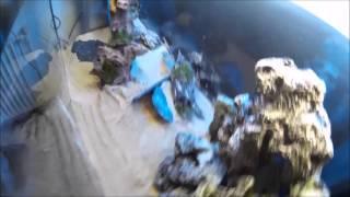 Aquarium setup first time juwel rio 180
