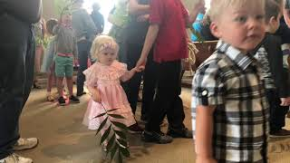 Palm Sunday 2019 Madison Christian Church