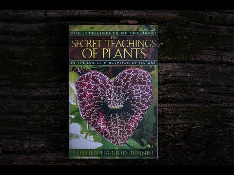 The Secret Teachings Of Plants (Book Review)