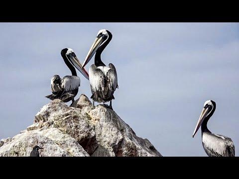AMAZING BALLESTAS ISLANDS. ADVENTURE TRAVEL IN PERU