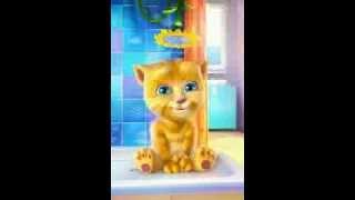 Lagu Burung Kakak Tua Version Kucing Lucu | Di Jamin Bikin Anak Ketawa