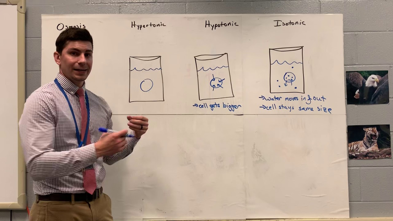 Keystone Biology Review 4 Part 2 - YouTube