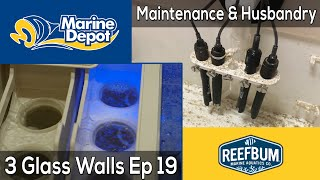 Maintenance and Husbandry: 3 Glass Walls with Reefbum Part 19