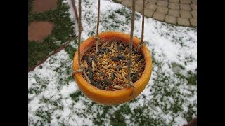 How To Make A Grapefruit Bird Feeder - Easy To Follow With Step By Step Instructions