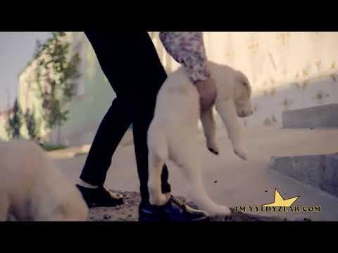 Amalia -yok yok taze turkmen klip 2019