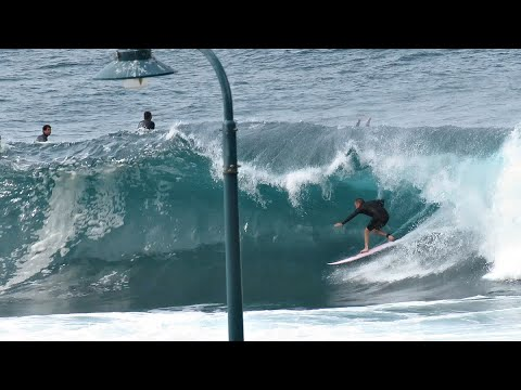 Seal, Wipe Outs, Sunrise & Lifeguards - Bronte Beach - By Cora Bezemer