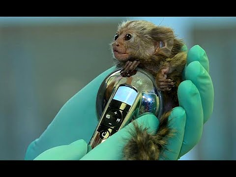 Egzotyczny pacjent przemyskiej kliniki dla zwierząt