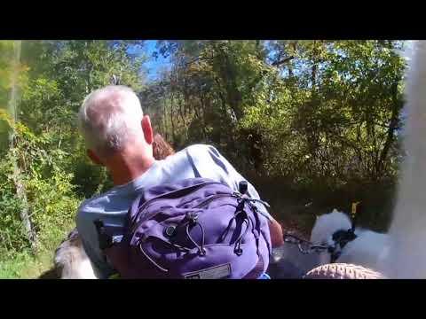 dog-entertainment---dog-relaxation---dog-music-while-our-husky-dog-princess---furwheeling