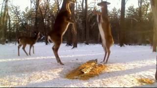 Deer Trail 2-3-17